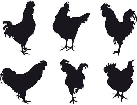 Cockerel Vector