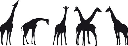 giraffe silhouette: Giraffe