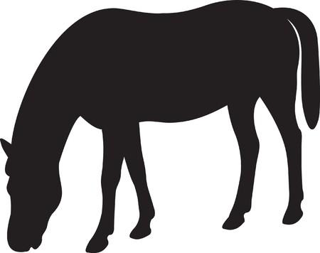 Horse Stock Vector - 7740702