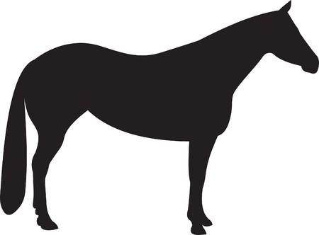 Horse   Stock Vector - 7740738