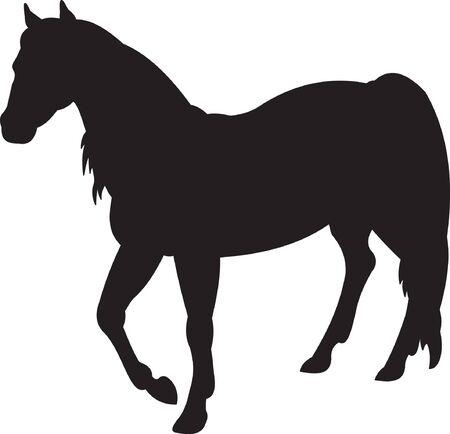 Horse Stock Vector - 7740625