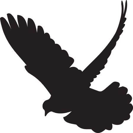 pigeons: Dove