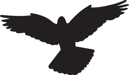 flock: Dove   Illustration