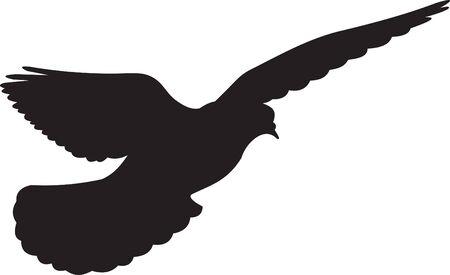 pigeon: Dove