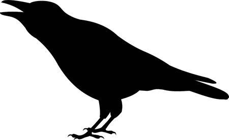 corvo imperiale: Corvo