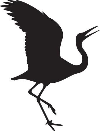 crane bird: Bird