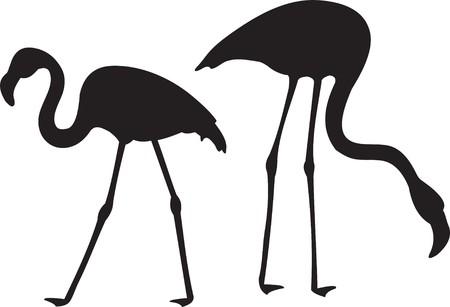 female animal: Flamingo