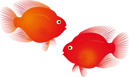 freshwater bird: Red parrot fish vector Illustration