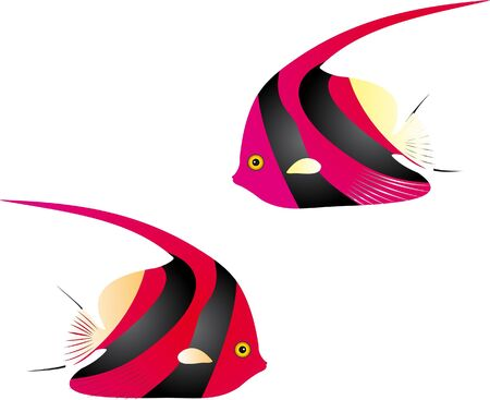 Angelfish vector Vector