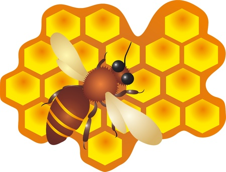 Bee And Honey vector Stock Vector - 8923486