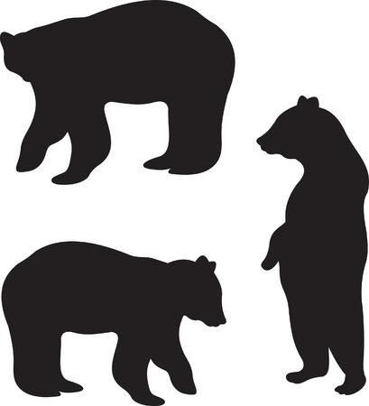 ours: Bear vecteur