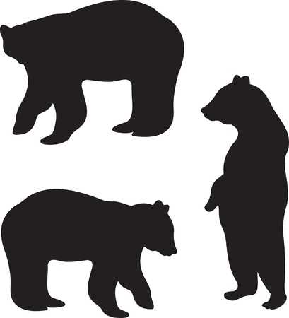 oso: Vector de oso