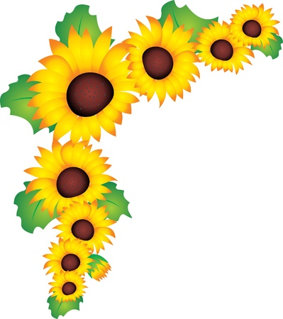 flowers close up: Sunflower vector