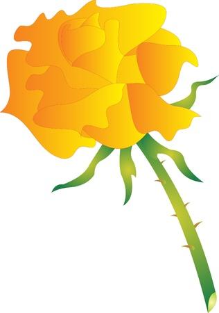 Rose vector Vector