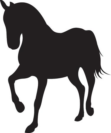 arabian horse: horse silhouette vector