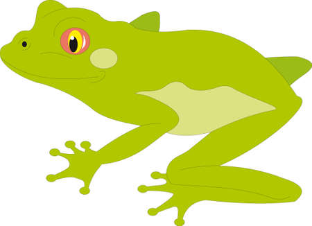 animal watching: Frog vector
