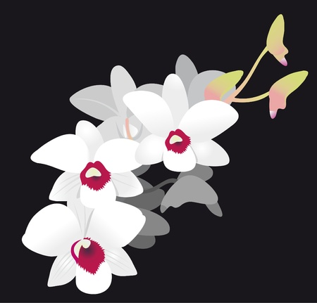 White Orchid Stock Vector - 9716700