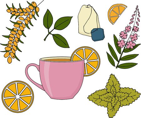 Herbal tea set. Herbal tea cup, plants and fruits raster Illustration