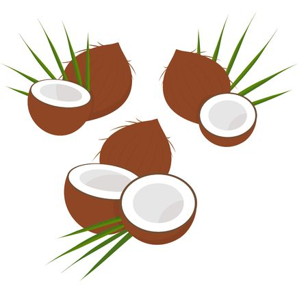 Coconut with half and leaves. Collection of diferent coconut. Vector illustration on white background Ilustração