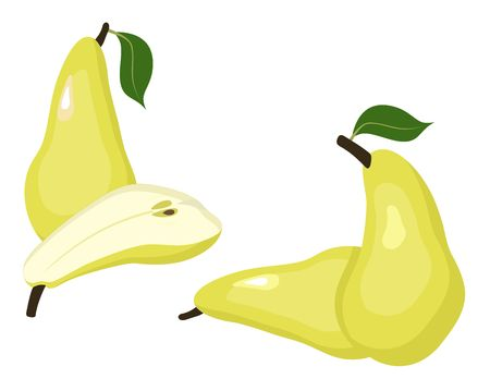 Pears isolated vector illustration. Whole pear and a half conference pear fruit on white background.