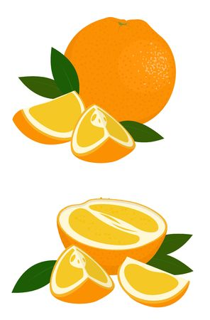 Orange whole, half and slice of orange with leaves isolated on white background. Citrus fruit. Vector illustration of oranges on white background. Ilustração