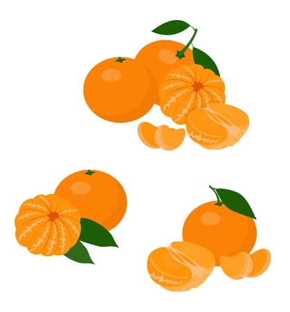 Mandarines, tangerine, clementine with leaves isolated on white background. Vector Illustration set on white background Vetores