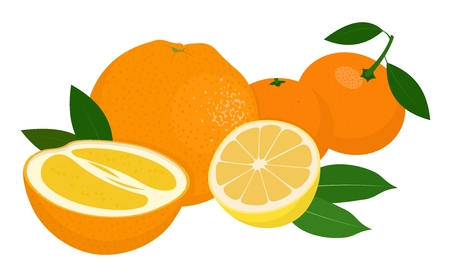 Mandarines, tangerine, clementine, orange, lemon with leaves isolated on white background. Citrus fruit. Raster Illustration