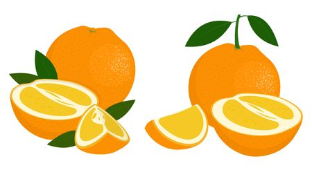 Orange whole, half and slice of orange with leaves on white background. Citrus fruit. Raster illustration of oranges on white background.
