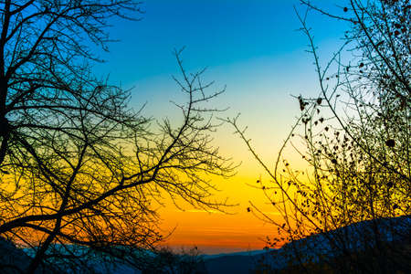 A very beautiful sunset. Blue and orange colors. Branches of a tree against the sky. Saturated color. Psilocybin. The look of a man who has perverted psilocybin mushrooms. Psilocybe semilanceata Standard-Bild