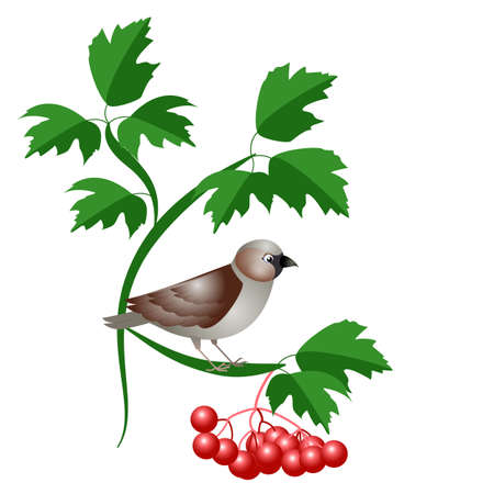 vector illustration of a sparrow on a branch  イラスト・ベクター素材