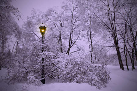 Lonely lantern shines in winter park at evening photo