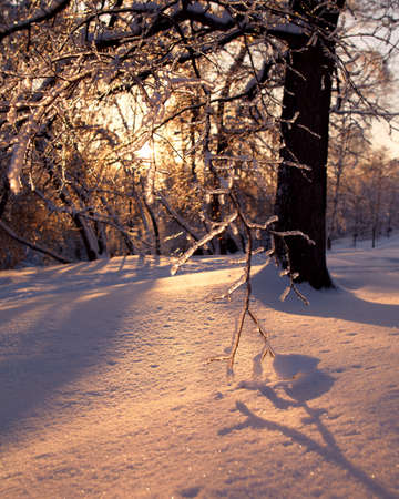 Ice-covered trees casts deep shadows in the glow of winter sunset photo