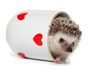 Hedgehog comes out of the cup decorated with red hearts Stockfoto