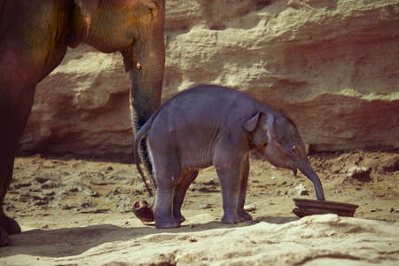 south africa soil: Adult elephant helps to make the first steps of its little baby elephant Stock Photo