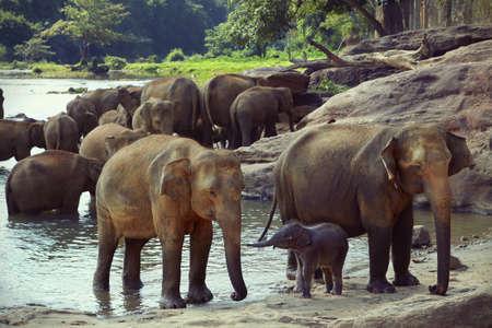 communicates: Baby elephant communicates with his mother Stock Photo