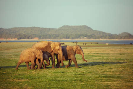 south africa soil: Family of elephants walking on lakeside Stock Photo