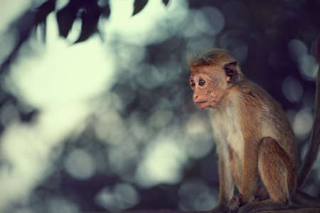 curiously: Young monkey curiously looks at passing tourists