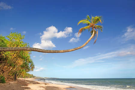 Inclined palm stretches to the sky above the sandy beach of a tropical island photo