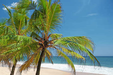 Tops of palm trees against the ocean on a sunny day photo