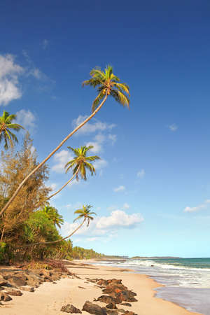 The shore of a tropical island. The tall and thin palm trees grow on the left. Warm waves rolls from the right. The weather is sunny and warm, and there are fluffy clouds in the sky. photo