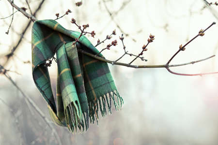 swells: Forgotten checkered scarf hanging on a branch lit by sunlight. Buds swells on the trees. Spring has come