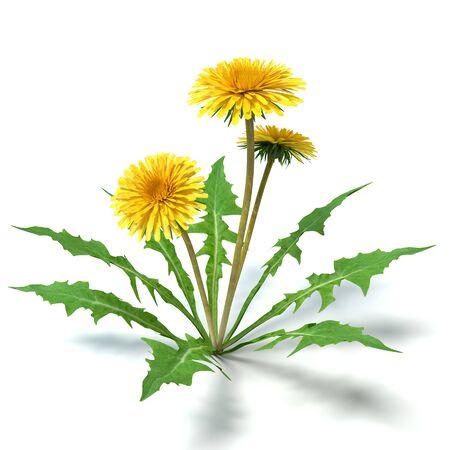 タンポポの花の 3 d イラストレーション