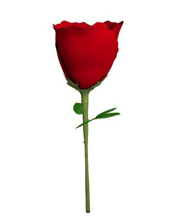 3d illustration of a rose