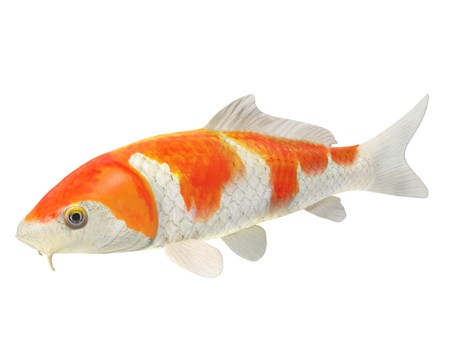 3d illustration of a koi fish 免版税图像