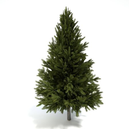 3d illustration of a pine tree Imagens