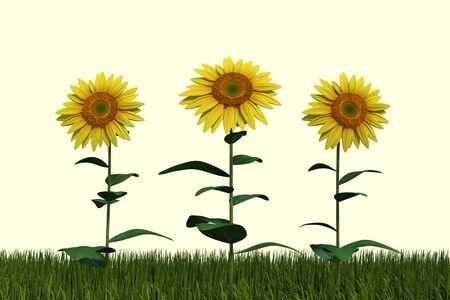 3d illustration of sunflowers
