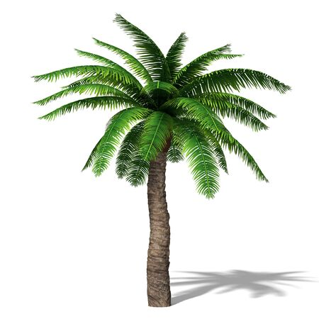 3d illustration of a palm tree Imagens