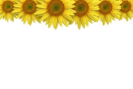 3d illustration of a sunflower border Imagens