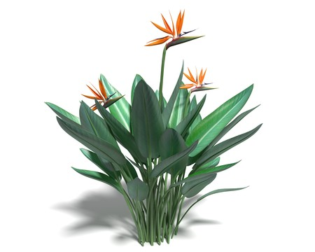 3d illustration of a bird of paradise plant