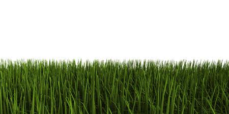 3d illustration of grass Stok Fotoğraf